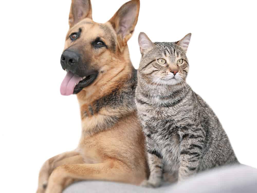 forbid-dog-cat